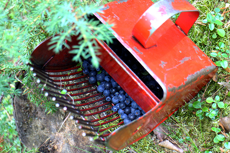 Berry picking tool, Finland