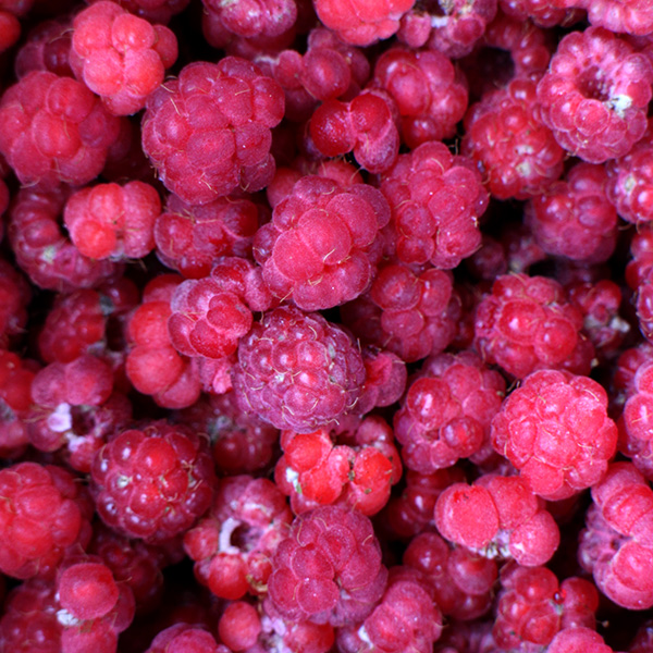 Raspberries, middle of August, north Finland