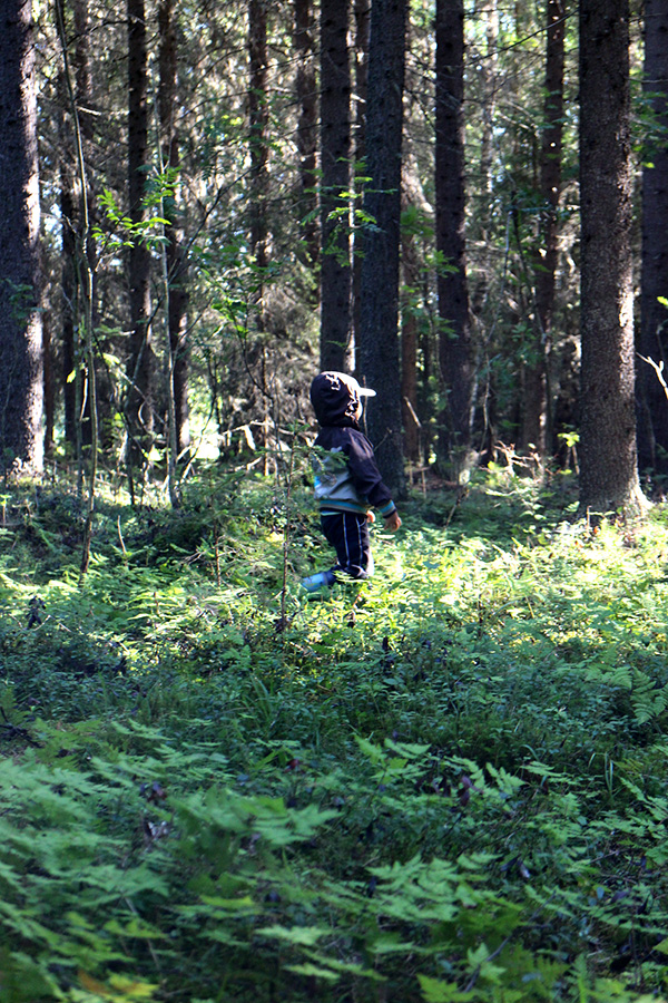 Forest, middle of August, Koivu, Finland
